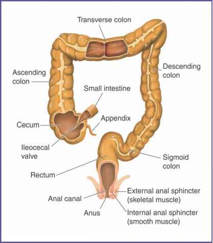 Difference Between Colon and Anal Cancer